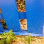 Нижня планка паркану зі штахету